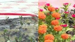 Как готовятся к визиту президента: чинят дороги, красят гаражи, сажают цветы