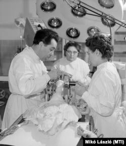Gertner Mihály adjunktus egy liba agyát műti a Gödöllői Agrártudományi Egyetemenen, 1965. március 5-én. Az egyetemen több és jobb minőségű libamáj létrehozásával kísérleteztek A libák agyában elektromos izgatással akarták kikapcsolni a jóllakottság érzetét, ami által a liba folyamatosan evett volna, amíg ételt lát, még jobban zsírosítva így a máját.