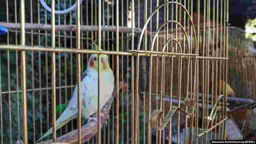 Попугай во дворе одного из заведений
