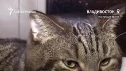 Кота не пустили в самолет на рейс до Владивостока, но он все равно смог улететь
