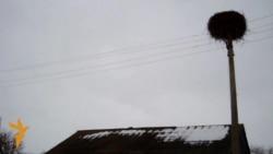 Такое жыцьцё: Цёмная дарога на Смаленск