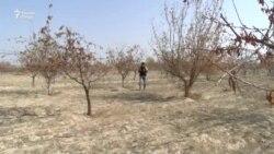 Национальный парк в Фархоре засыхает