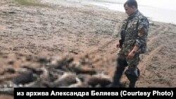 Охотинспектор возле туш мертвых оленей на берегу Хатанги