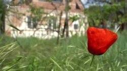 «Репрессии продолжаются, они не утихали никогда» – мать Муслима Алиева (видео)