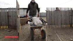 Птичий грипп в Казахстане. В семи районах объявили карантин