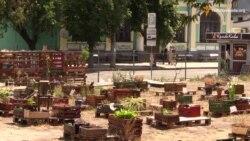 Трансформація міста: активісти створюють сади та змінюють міський простір