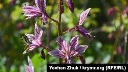 Ядовитое растение ясенец – купина неопалимая