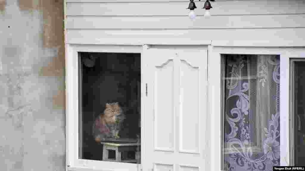 Кішка уважно спостерігає з вікна