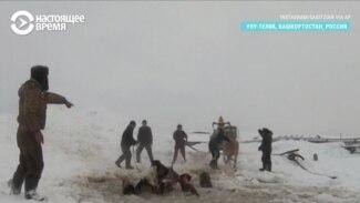 В Башкирии спасают лошадей, которые провалились под лед