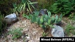 Rijetke biljke