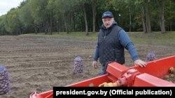 Аляксандар Лукашэнка і яго бульбакапалка