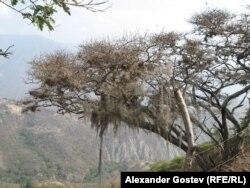 Засуха в Венесуэле, на бывшем месте влажного андского леса