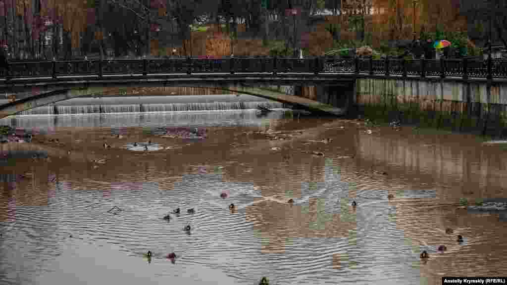 Дощі наповнюють річку Салгир, де привільно себе почувають лише підгодовані жителями міста дикі качки