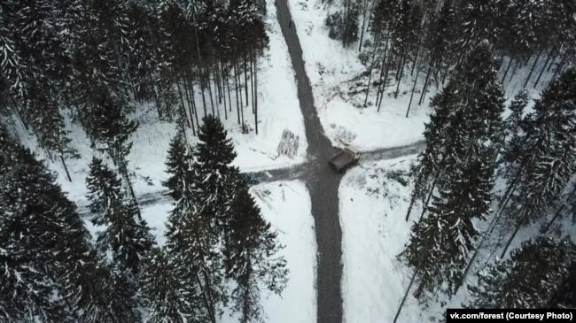 Пуловский лес