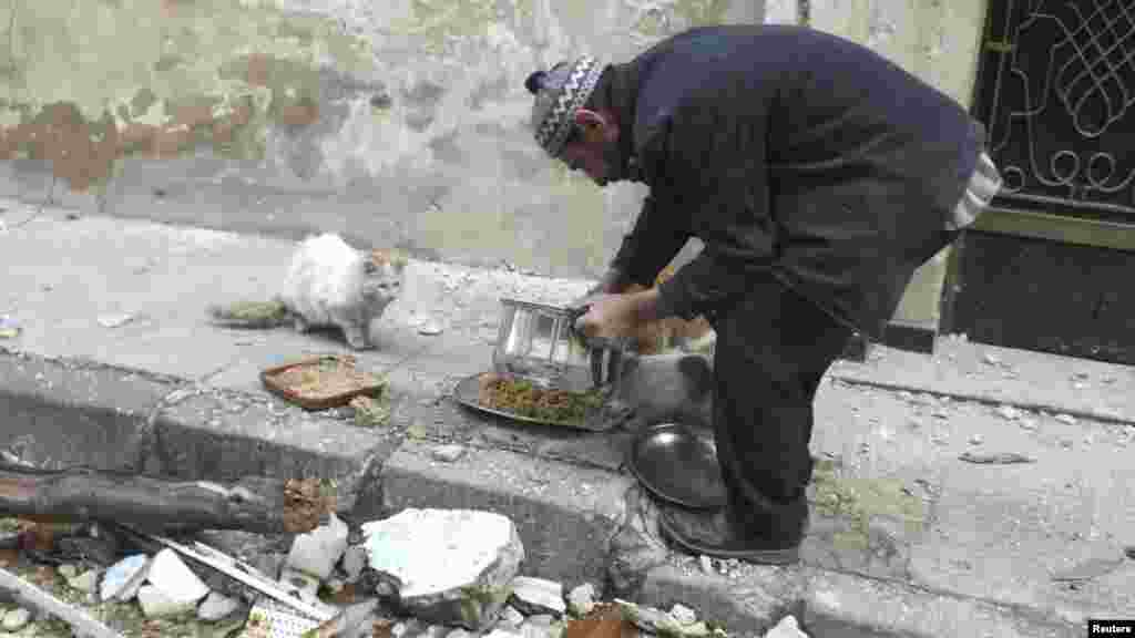 A man gives food to cats in the al-Khalidiya neighborhood of embattled Homs, Syria. (Reuters/Yazan Homsy)