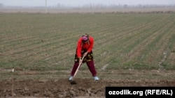 Farmers working small plots of land are worried about the reforms.