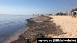 Водорості на пляжі Євпаторії