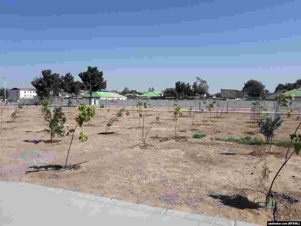 Türkmenistanda ýylda dabaraly ýagdaýda 3 million çemesi agaç ekilýär. Täze oturdylan nahallaryň ençemesi ýylyň dowamynda guraýar, Aşgabat