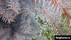 Крашенная елка. Фото Фариды Шарифуллиной.