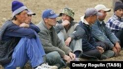 Мигранты, работающие на сельскохозяйственных угодиях в Волгоградской области. Архивное фото.