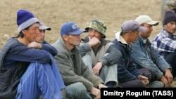 Мигранты, работающие на сельскохозяйственных угодиях в Волгоградской области