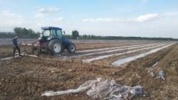 Наманганда пахтани кўпайтириш мақсадида юзлаб гектар полиз экинлари ва сабзавот бузиб ташланди