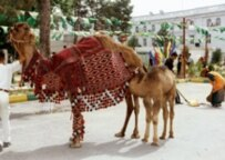 Turkmenistan celebrates Carpet Day in May 2004 (TASS)