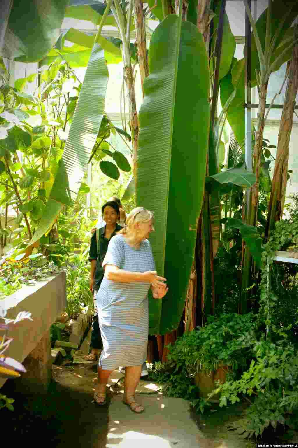 Банан - жалбырагынын узундугу 3-5 метрге жеткен көп жылдык өсүмдүк. Ал жылуу климатты сүйөт.