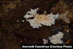 Унікальна знахідка: гриб-корал