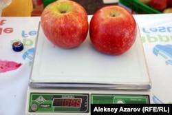 Два яблока сорта апорт тянут больше чем на один килограмм. Алматы, 16 сентября 2012 года.