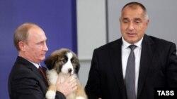 На 13 ноември 2010 г. Бойко Борисов подари на Владимир Путин кученце