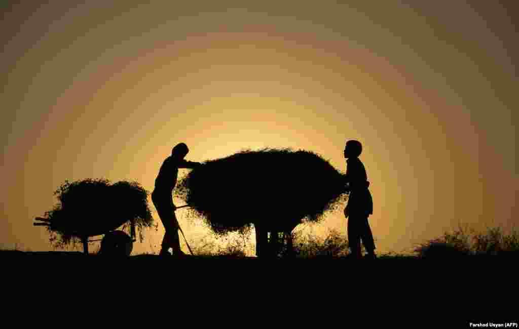 ავღანელი ბავშვები ფიჩხს ფიჩხს აგროვებენ ოჯახისთვის. (AFP PHOTO / FARSHAD USYAN)