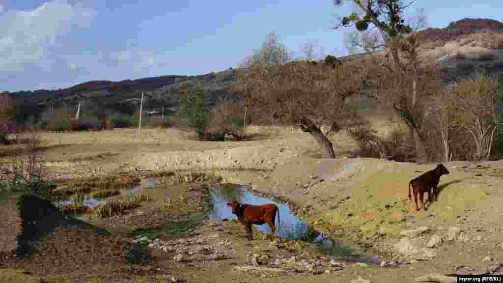 Туристы-любители не в восторге от нынешней осени – на горных речушках повсеместно исчезли водопады и «ванны молодости». Другие водоемы превратились в большие лужи, подобно этому пруду рядом с селом. Местные говорят, что засуха здесь уже не первый год