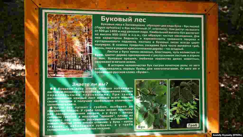 На таких досках в заповеднике размещены короткие информационные справки для посетителей. Эта позволяет узнать больше о буковой зоне заповедного леса