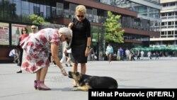 Psi lutalice, Sarajevo, avgust 2012.