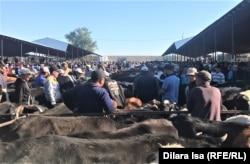 Фермеры говорят, что из-за засухи и повышения цен на корма многие решили продать часть скота. Из-за превышения предложения над спросом цены на овец, коров и лошадей снижаются