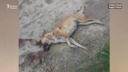 Под Ташкентом отстреляли пять нападавших на скот диких собак