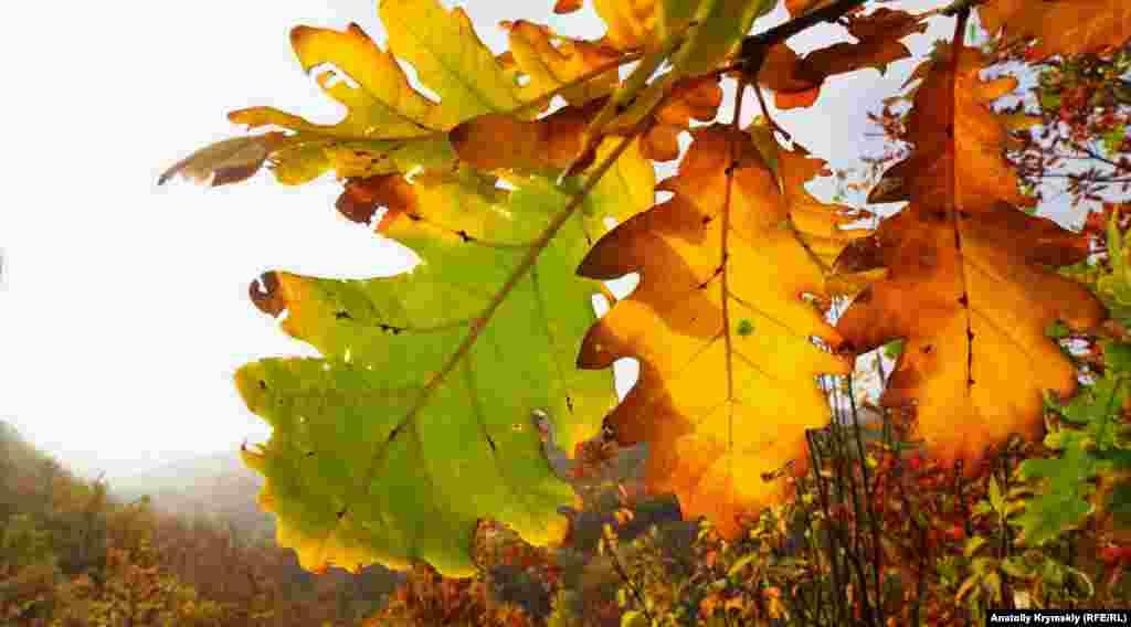 Листяний ліс спускається до річки Бештерек. Її назва перекладається з тюркської як «п'ять дерев»