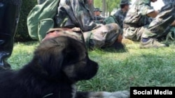 Спасенный из-под завалов в Тяньцзине щенок рядом со спасателями