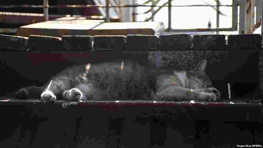 Уличный кот дремлет в тени