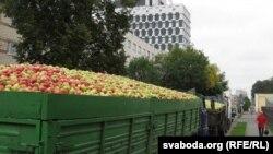 Чарга машын на гомельскі вінзавод, каб здаць яблыкі на перапрацоўку яблыкі