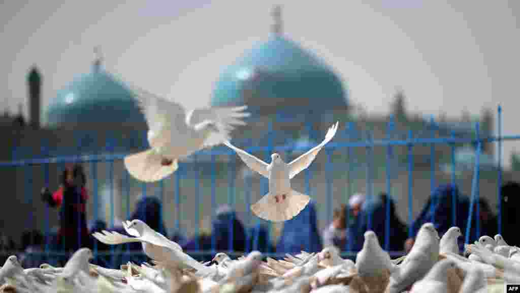 A pigeon in mid-flight close to the Hazrat-e Ali shrine in Mazar-e Sharif, Afghanistan, on March 23. (AFP/Johannes Eisele)