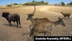 Изюмовка и ее «африканские» окрестности: чем живет крымская глубинка (фотогалерея)