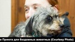 Зоозащитница Анчишкина считает, что России нужна судебная практика наказаний за жестокое обращение с животными