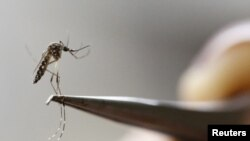 Komarac, ilustrativna fotografija