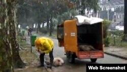 Несколько дней назад горожане стали свидетелями отстрела свиней и коров, пасущихся в центре города