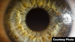 Человеческий глаз. Иллюстративное фото.