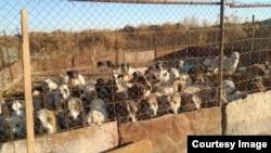 """""""В организованных властями приютах животным грозит голодная смерть"""""""