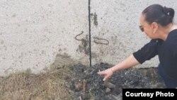 Зоозащитники показывают на сожженные останки