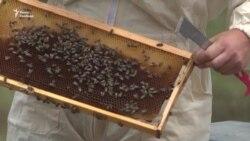 Боротьба за виживання бджіл. Досвід Греції (відео)